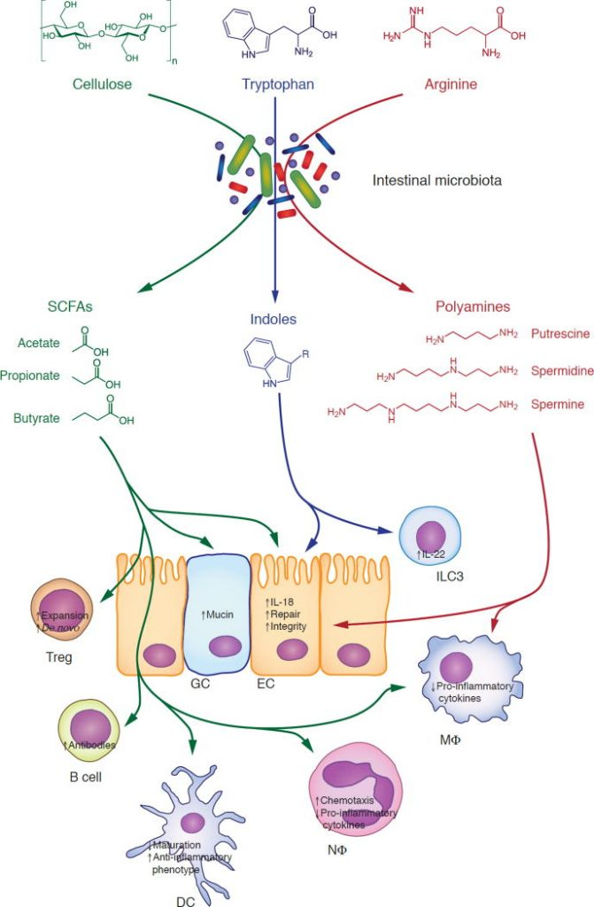 Understanding the Holobiont: How Microbial Metabolites Affect Human Health and Shape the Immune System.
