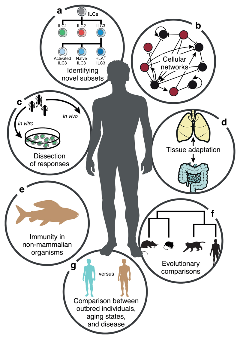 Single-cell transcriptomics to explore the immune system in health and disease.